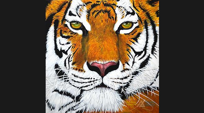 18_tiger_babu